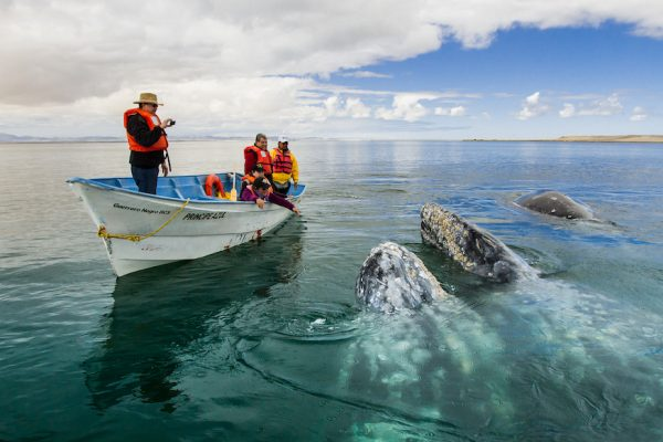 Copia de Whale Watching